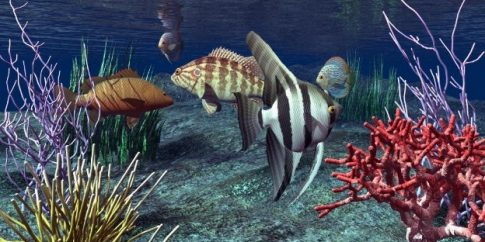 A tenger mélyén, akvárium matrica