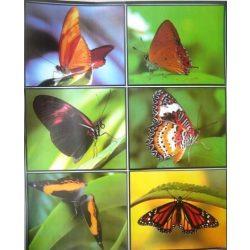 Pillangók, csempematrica