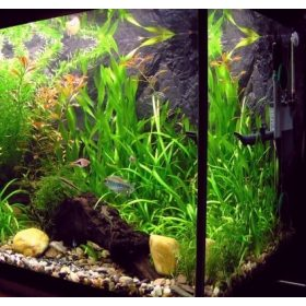 Akvárium matricák
