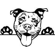 Amerikai pit bull autómatrica a Dekormatricák webáruház matricái közül