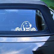 Golden Retriever autómatrica a Dekormatricák webáruház matricái közül