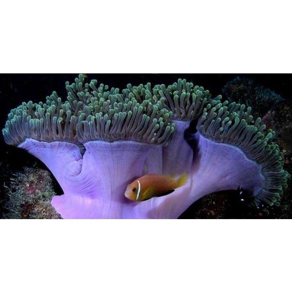 Élővilág, akvárium matrica