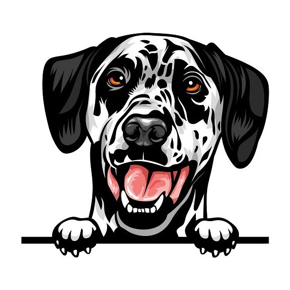 Dalmata rajzos autómatrica a Dekormatricák webáruház matricái közül