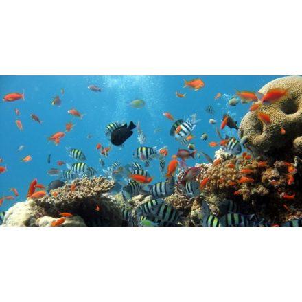 Vizivilág, akvárium matrica