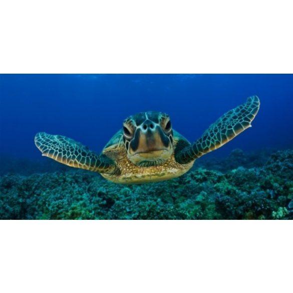 Teknős, akvárium matrica