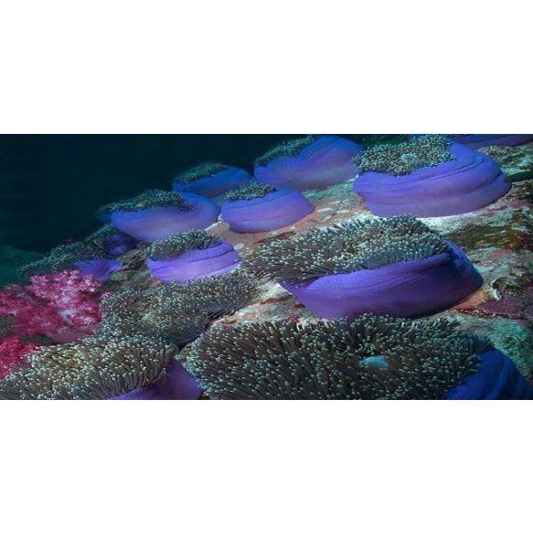 Növények, akvárium matrica