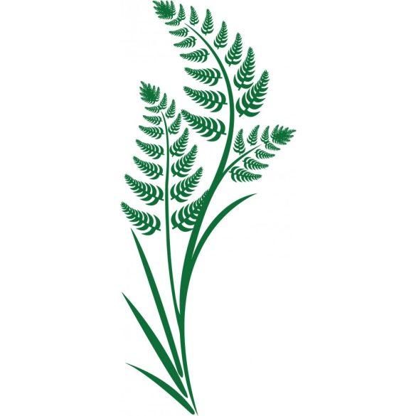 Páfrány, faltetoválás a Dekormatricák webáruház virágos falmatricái közül