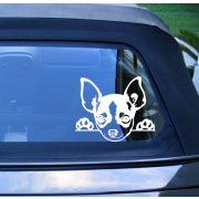 Chihuahua autómatrica a Dekormatricák webáruház matricái közül
