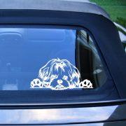 Shih-Tzu autómatrica a Dekormatricák webáruház matricái közül