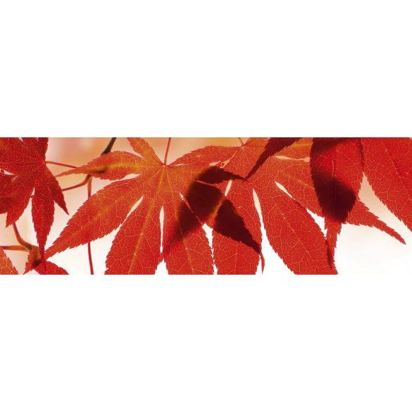 Piros levelek, konyhai matrica hátfal, 180 cm