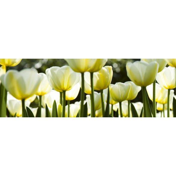 Fehér tulipánok, konyhai matrica hátfal, 180 cm