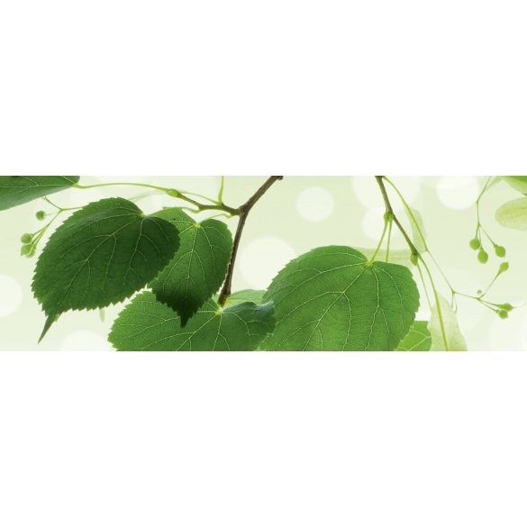 Zöld levelek, konyhai matrica hátfal, 180 cm
