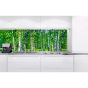 Nyírfaerdő, konyhai matrica hátfal, 180 cm