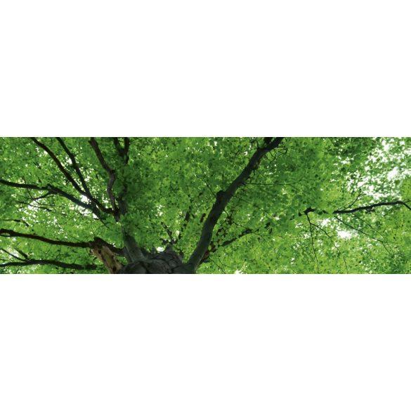 Lombkorona, konyhai matrica hátfal, 180 cm