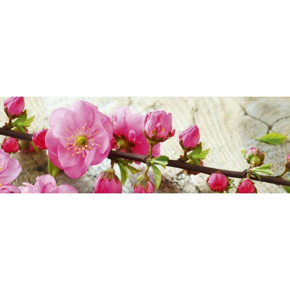 Virágzó cseresznyefaág, konyhai matrica hátfal, 180 cm