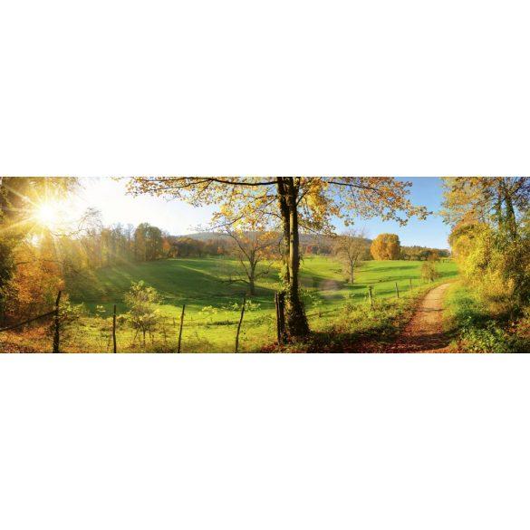 Napfényes erdei út, konyhai matrica hátfal, 180 cm