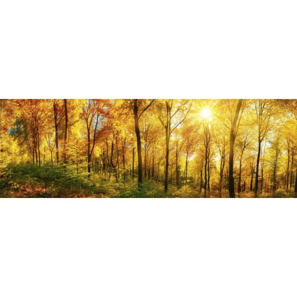 Fényes őszi erdő, konyhai matrica hátfal, 180 cm