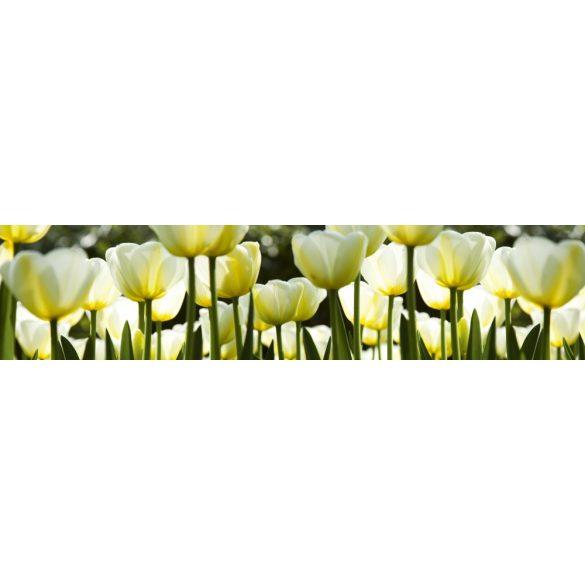 Fehér tulipánok, konyhai matrica hátfal, 260 cm