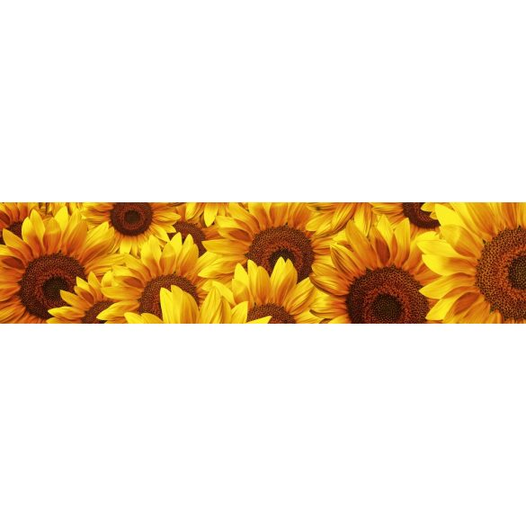Napraforgó virágok, konyhai matrica hátfal, 260 cm