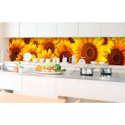 Napraforgó virágok, konyhai matrica hátfal, 350 cm