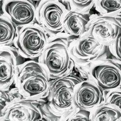 Fehér rózsa mintás öntapadós tapéta a Dekormatricák Webáruházban